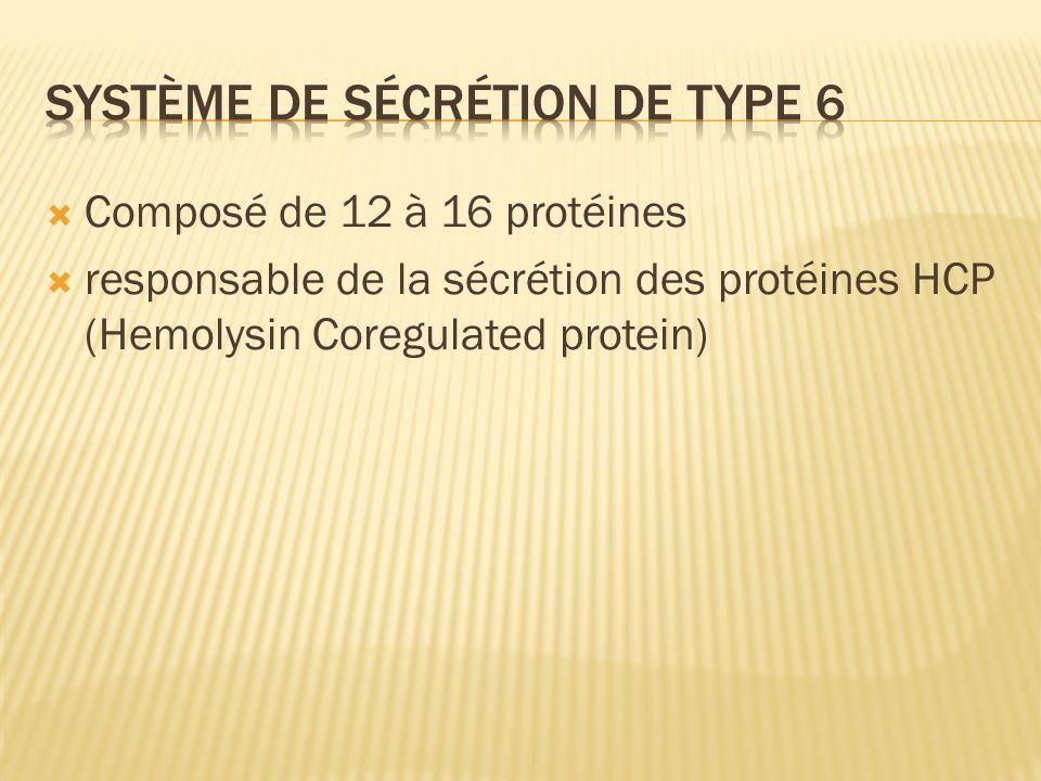 Composé de 12 à 16 protéines responsable de la sécrétion des protéines HCP (Hemolysin Coregulated protein)