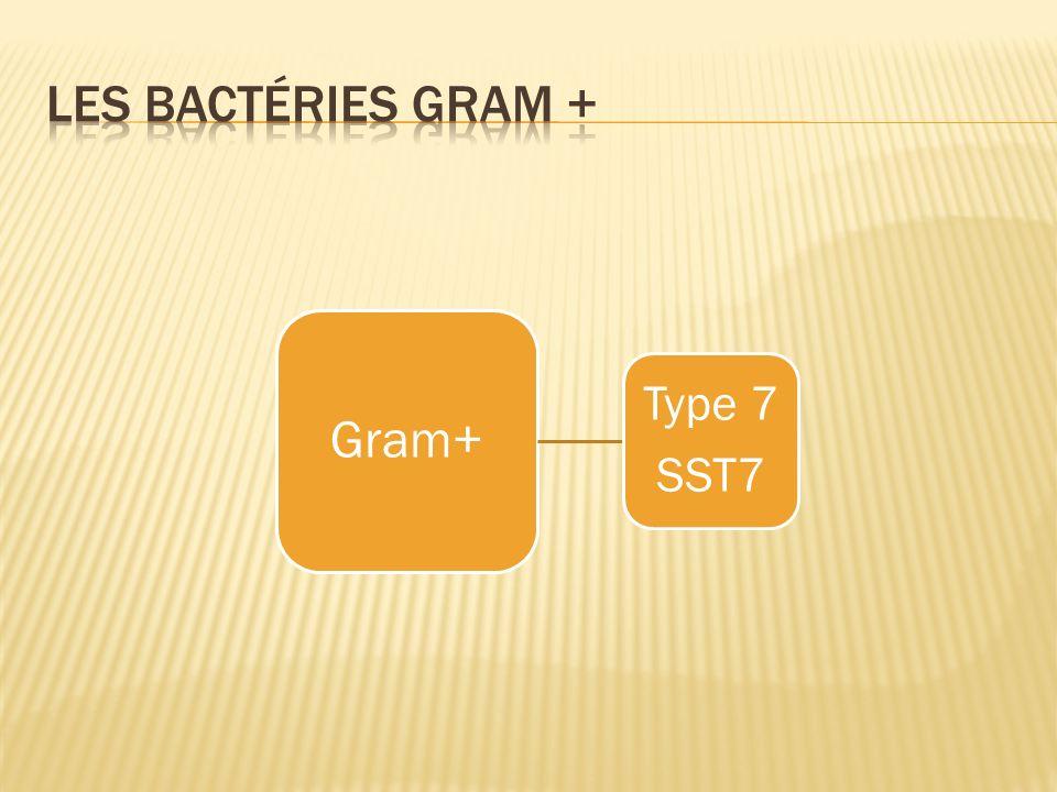 Gram+ Type 7 SST7