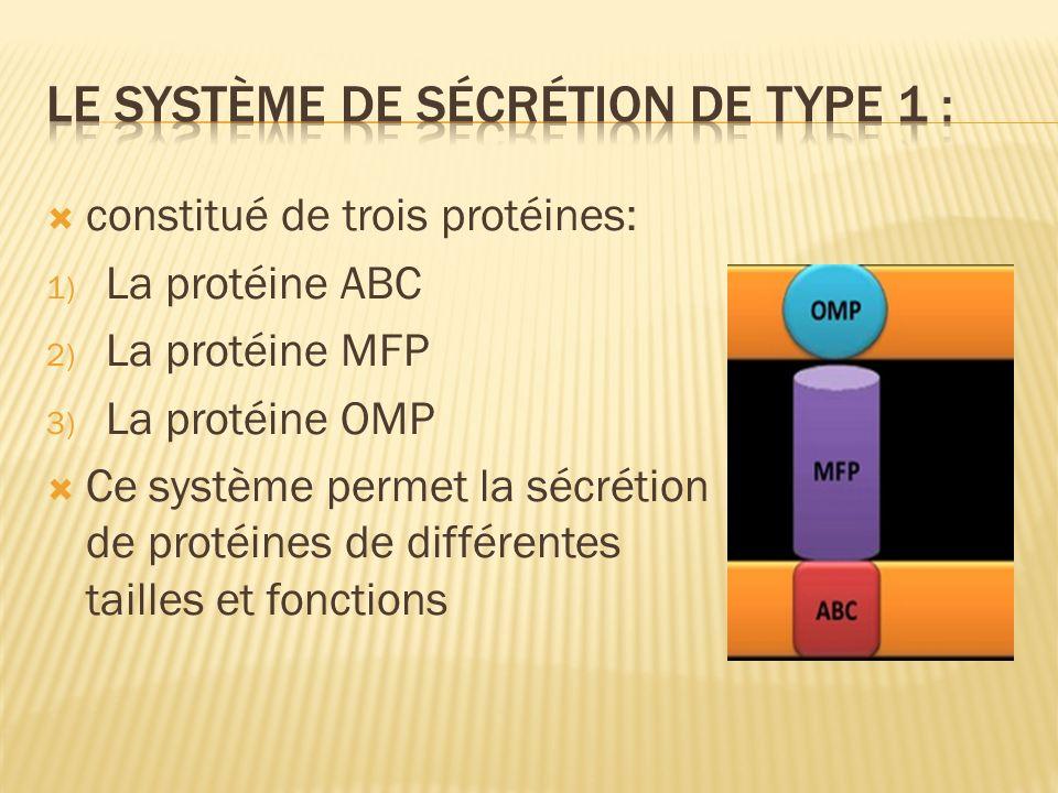 constitué de trois protéines: 1) La protéine ABC 2) La protéine MFP 3) La protéine OMP Ce système permet la sécrétion de protéines de différentes tailles et fonctions