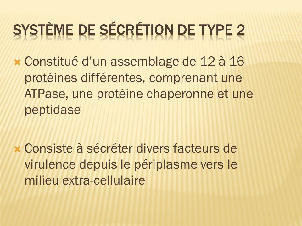 Constitué dun assemblage de 12 à 16 protéines différentes, comprenant une ATPase, une protéine chaperonne et une peptidase Consiste à sécréter divers facteurs de virulence depuis le périplasme vers le milieu extra-cellulaire