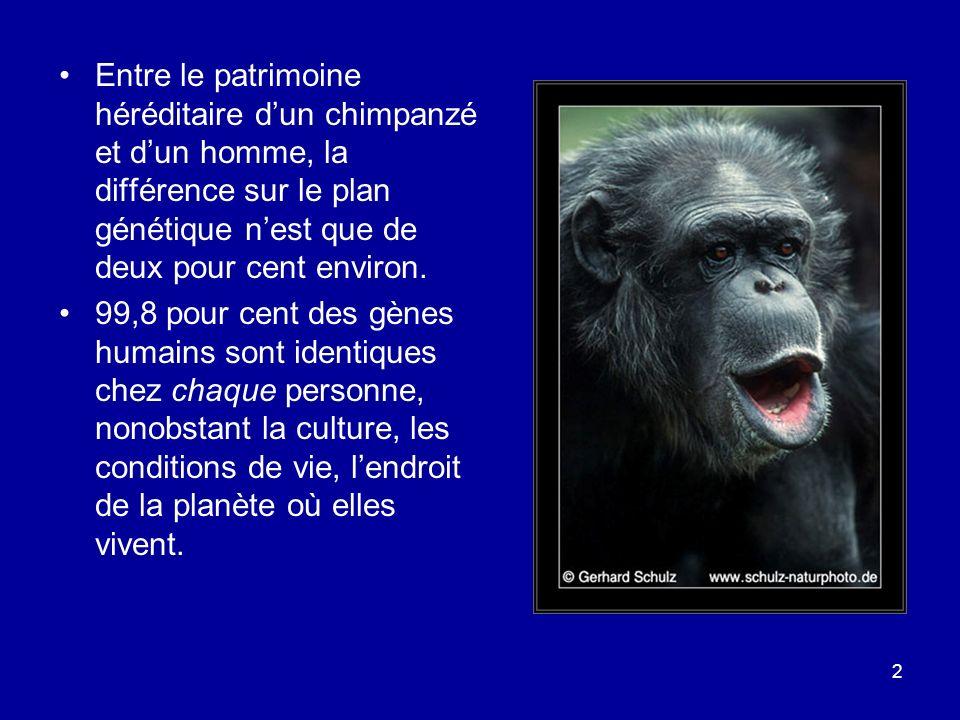 2 Entre le patrimoine héréditaire dun chimpanzé et dun homme, la différence sur le plan génétique nest que de deux pour cent environ. 99,8 pour cent d