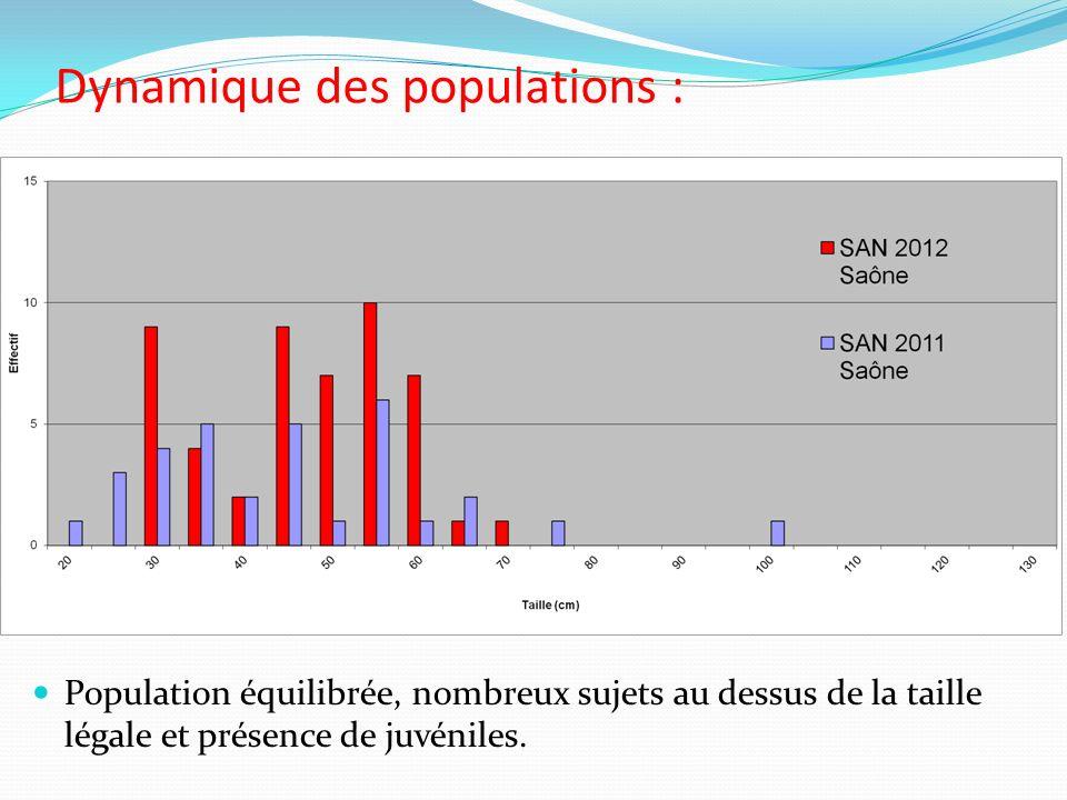 Dynamique des populations : Population équilibrée, nombreux sujets au dessus de la taille légale et présence de juvéniles.