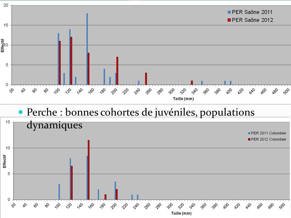 Perche : bonnes cohortes de juvéniles, populations dynamiques