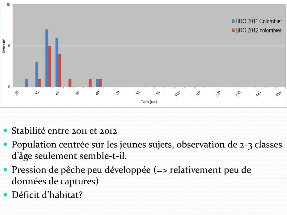 Stabilité entre 2011 et 2012 Population centrée sur les jeunes sujets, observation de 2-3 classes dâge seulement semble-t-il.