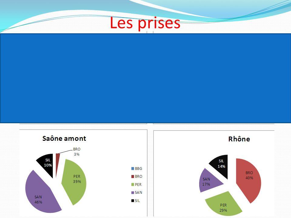 2 et 3 fois moins de prises dans le GL et le Rhône en 2012/2013 Un poisson pour 3 à 5h de pêche contre 2 pour 3h en 2011 Saône et Colombier : globalement stable, 1poisson/3h de pêche
