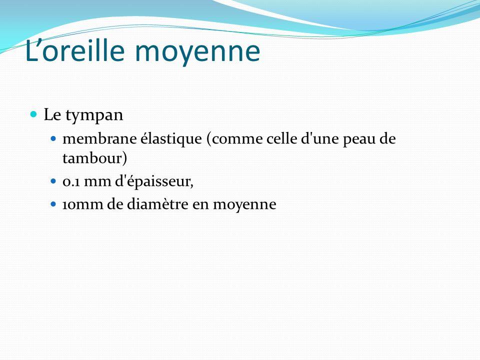 Loreille moyenne Le tympan membrane élastique (comme celle d'une peau de tambour) 0.1 mm d'épaisseur, 10mm de diamètre en moyenne