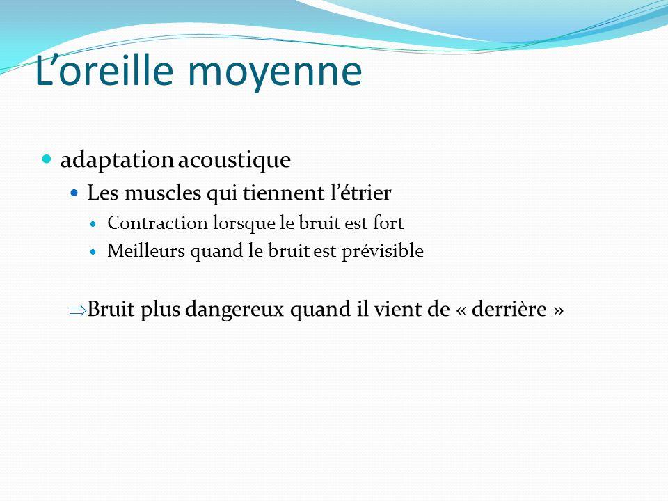 Loreille moyenne adaptation acoustique Les muscles qui tiennent létrier Contraction lorsque le bruit est fort Meilleurs quand le bruit est prévisible