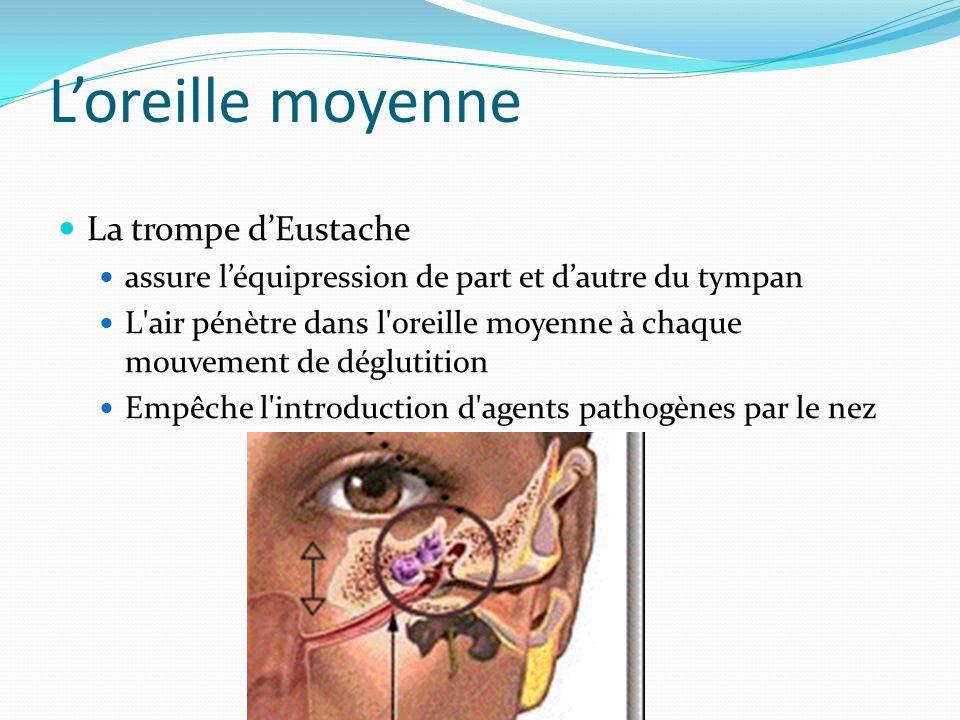 Loreille moyenne La trompe dEustache assure léquipression de part et dautre du tympan L'air pénètre dans l'oreille moyenne à chaque mouvement de déglu