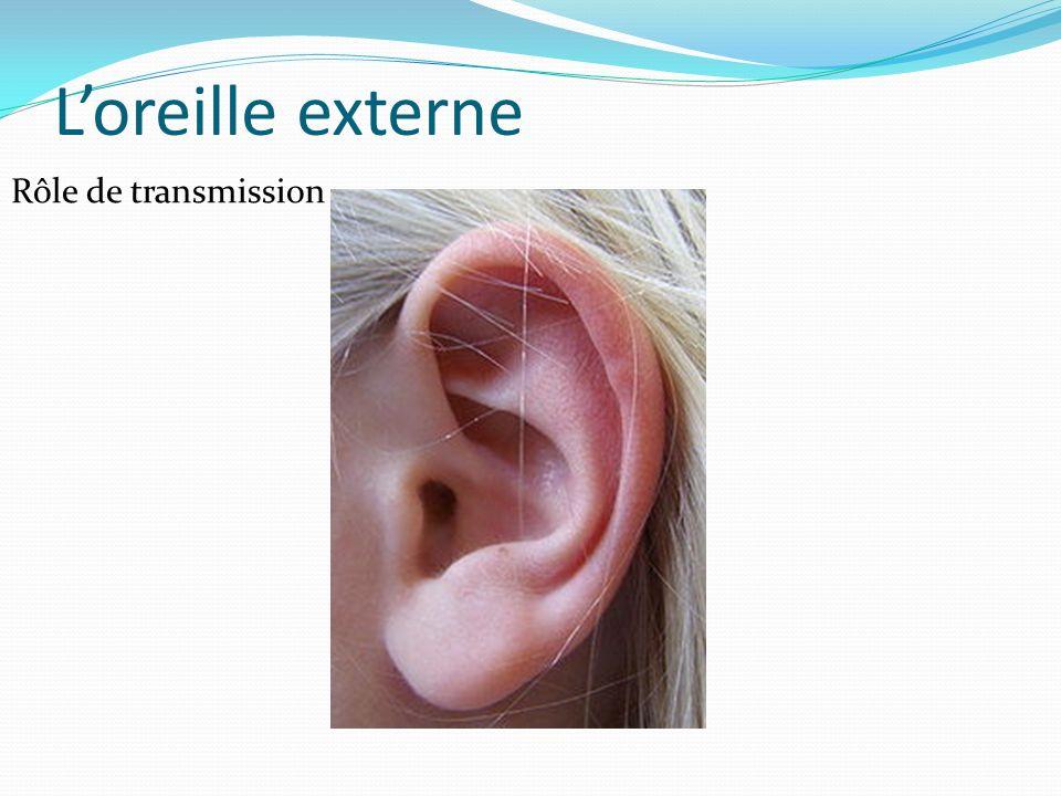 Loreille externe Rôle de transmission