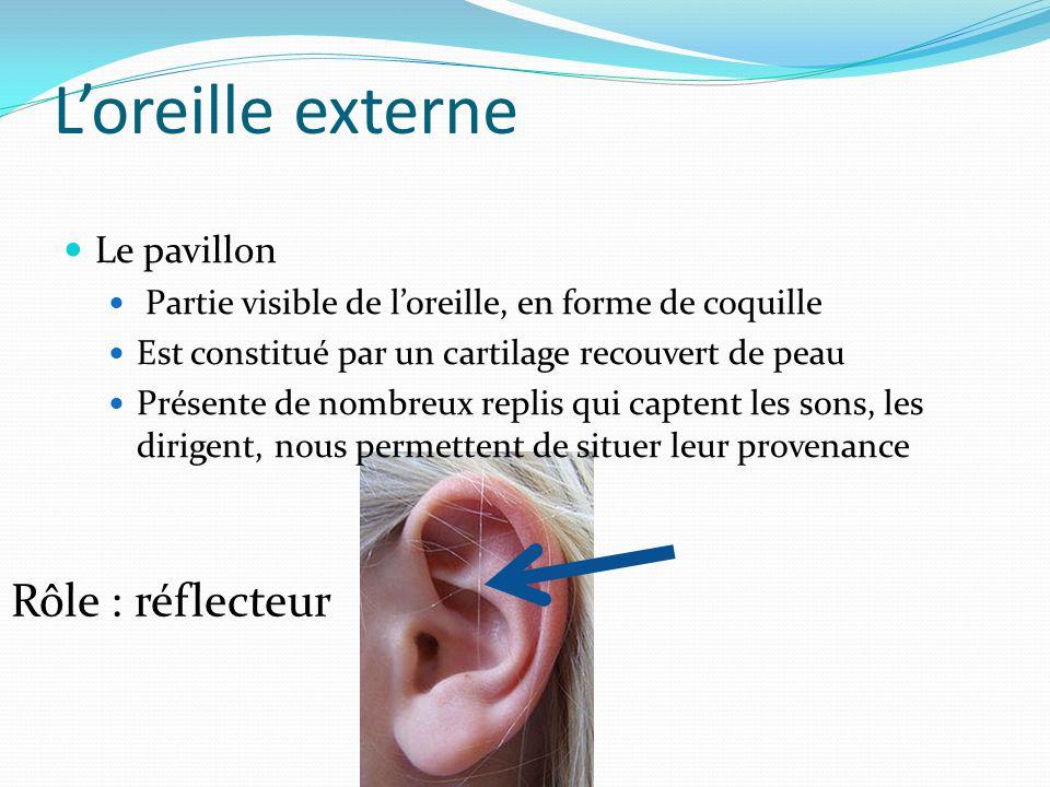 Loreille externe Le pavillon Partie visible de loreille, en forme de coquille Est constitué par un cartilage recouvert de peau Présente de nombreux re
