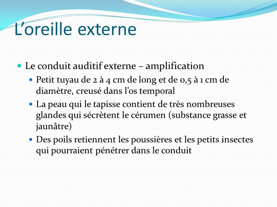 Loreille externe Le conduit auditif externe – amplification Petit tuyau de 2 à 4 cm de long et de 0,5 à 1 cm de diamètre, creusé dans los temporal La