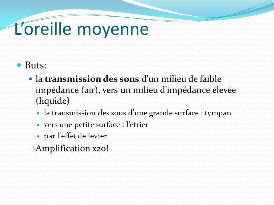 Loreille moyenne Buts: la transmission des sons d'un milieu de faible impédance (air), vers un milieu d'impédance élevée (liquide) la transmission des