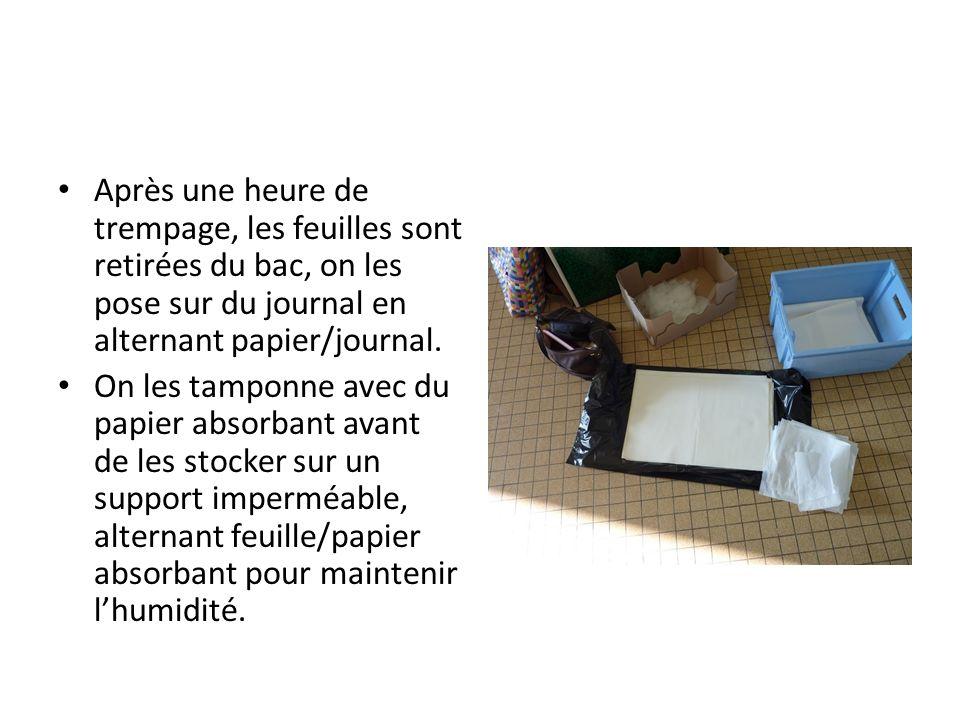 Après une heure de trempage, les feuilles sont retirées du bac, on les pose sur du journal en alternant papier/journal. On les tamponne avec du papier