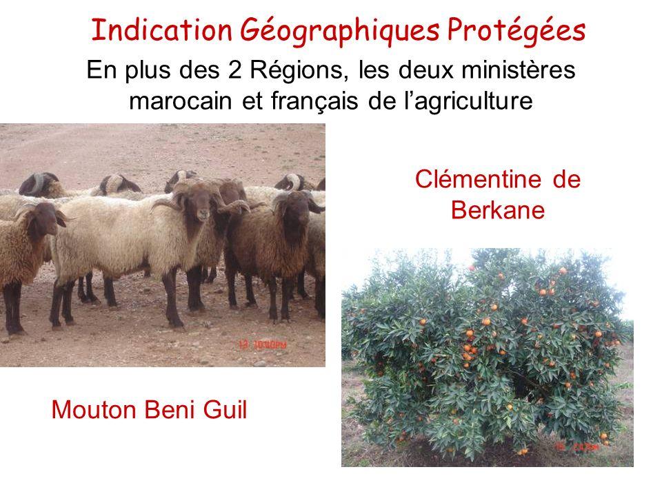Indication Géographiques Protégées Clémentine de Berkane Mouton Beni Guil En plus des 2 Régions, les deux ministères marocain et français de lagricult