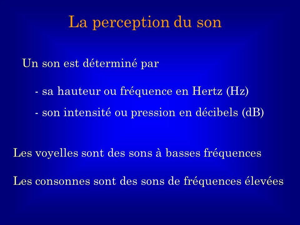 Un son est déterminé par - sa hauteur ou fréquence en Hertz (Hz) - son intensité ou pression en décibels (dB) La perception du son Les voyelles sont d