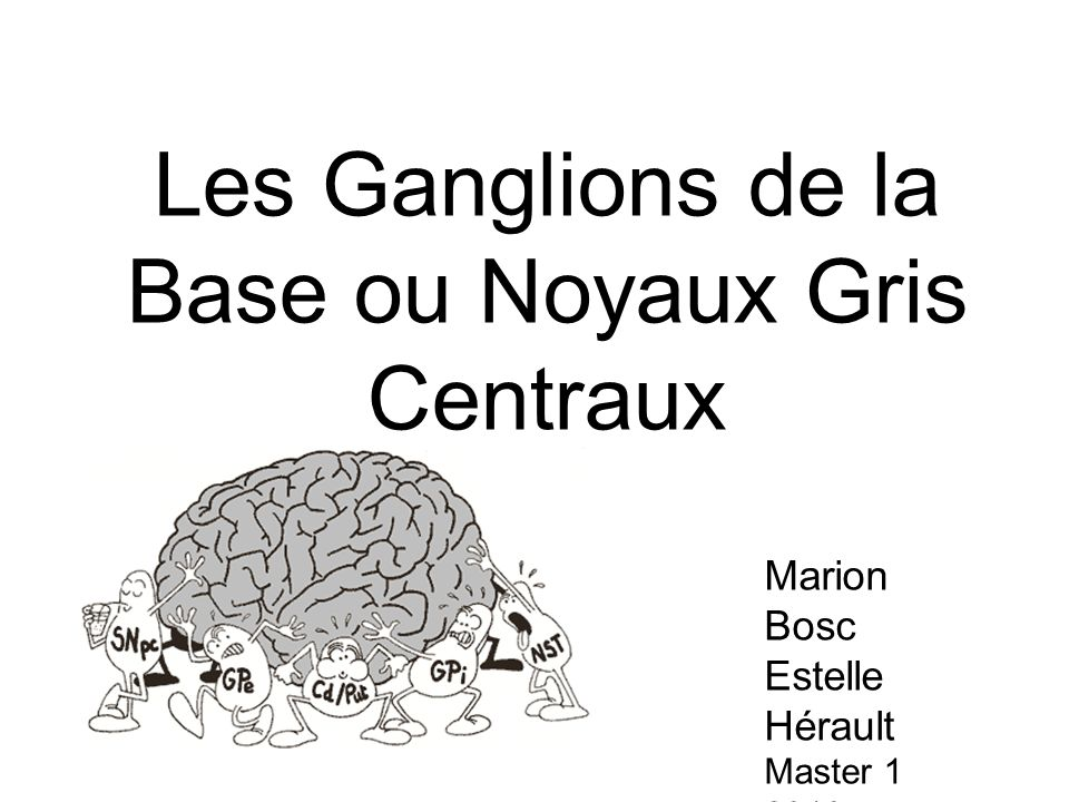 Les Ganglions de la Base ou Noyaux Gris Centraux Marion Bosc Estelle Hérault Master 1 2010