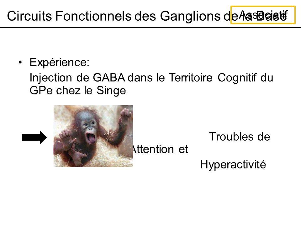 Circuits Fonctionnels des Ganglions de la Base Associatif Expérience: Injection de GABA dans le Territoire Cognitif du GPe chez le Singe Troubles de lAttention et Hyperactivité