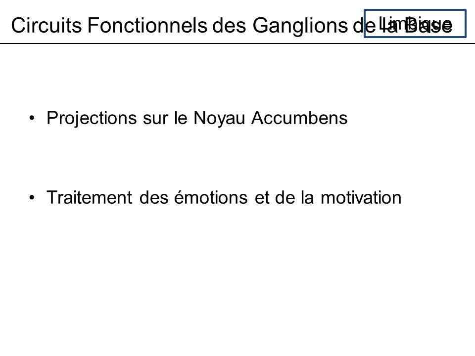 Circuits Fonctionnels des Ganglions de la Base Limbique Projections sur le Noyau Accumbens Traitement des émotions et de la motivation