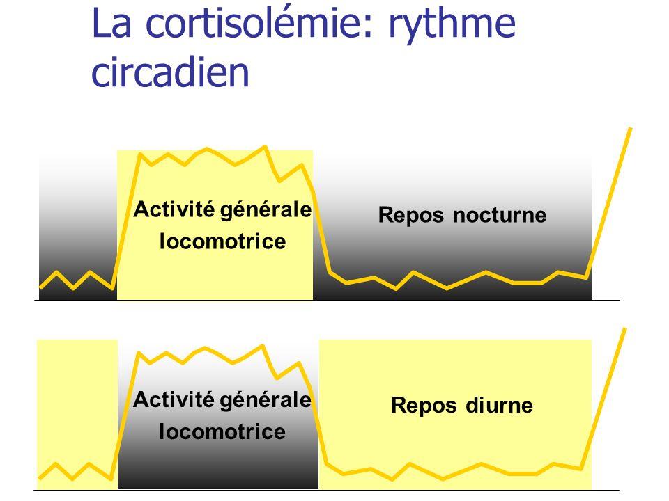 La cortisolémie: rythme circadien Activité générale locomotrice Repos nocturne Activité générale locomotrice Repos diurne