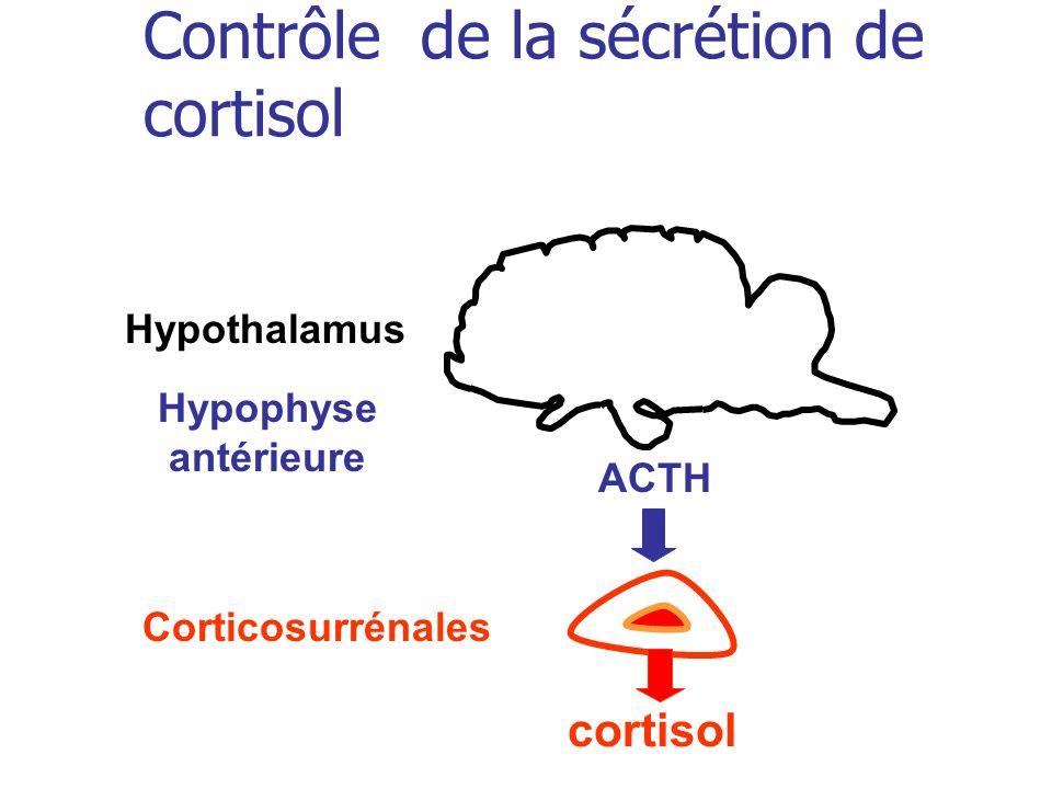 Contrôle de la sécrétion de cortisol ACTH cortisol Hypothalamus Hypophyse antérieure Corticosurrénales