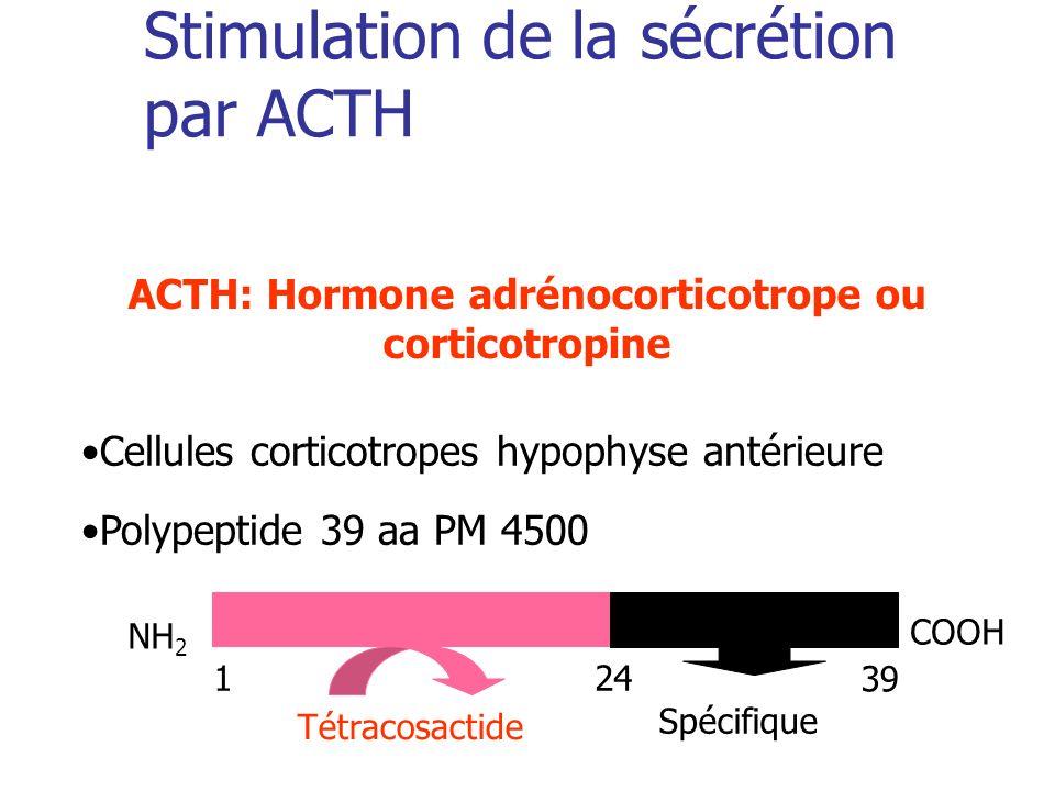 Stimulation de la sécrétion par ACTH Cellules corticotropes hypophyse antérieure Polypeptide 39 aa PM 4500 NH 2 COOH 124 39 Tétracosactide Spécifique