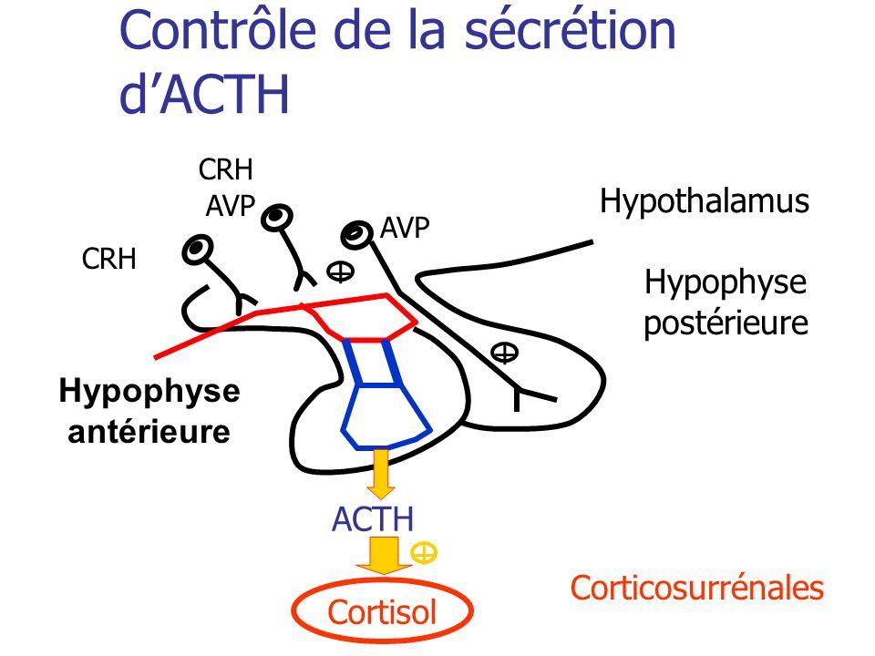 Contrôle de la sécrétion dACTH Corticosurrénales Hypophyse postérieure Cortisol ACTH + CRH AVP + Hypothalamus Hypophyse antérieure CRH AVP +