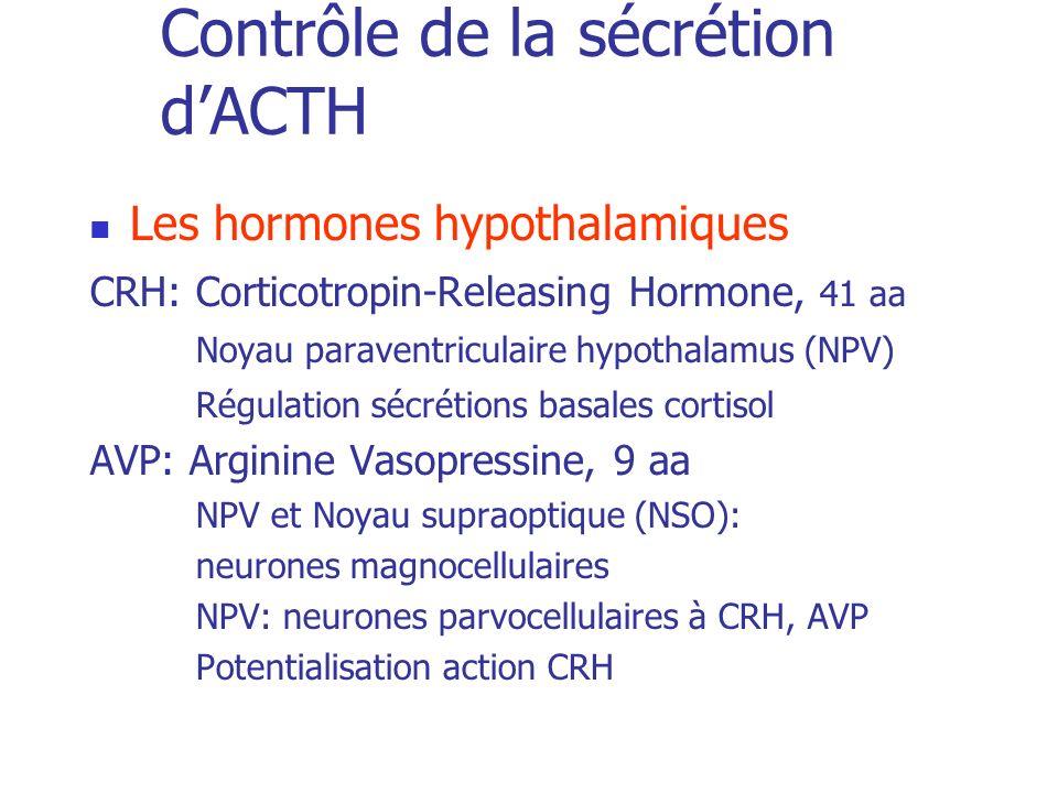 Contrôle de la sécrétion dACTH Les hormones hypothalamiques CRH: Corticotropin-Releasing Hormone, 41 aa Noyau paraventriculaire hypothalamus (NPV) Rég
