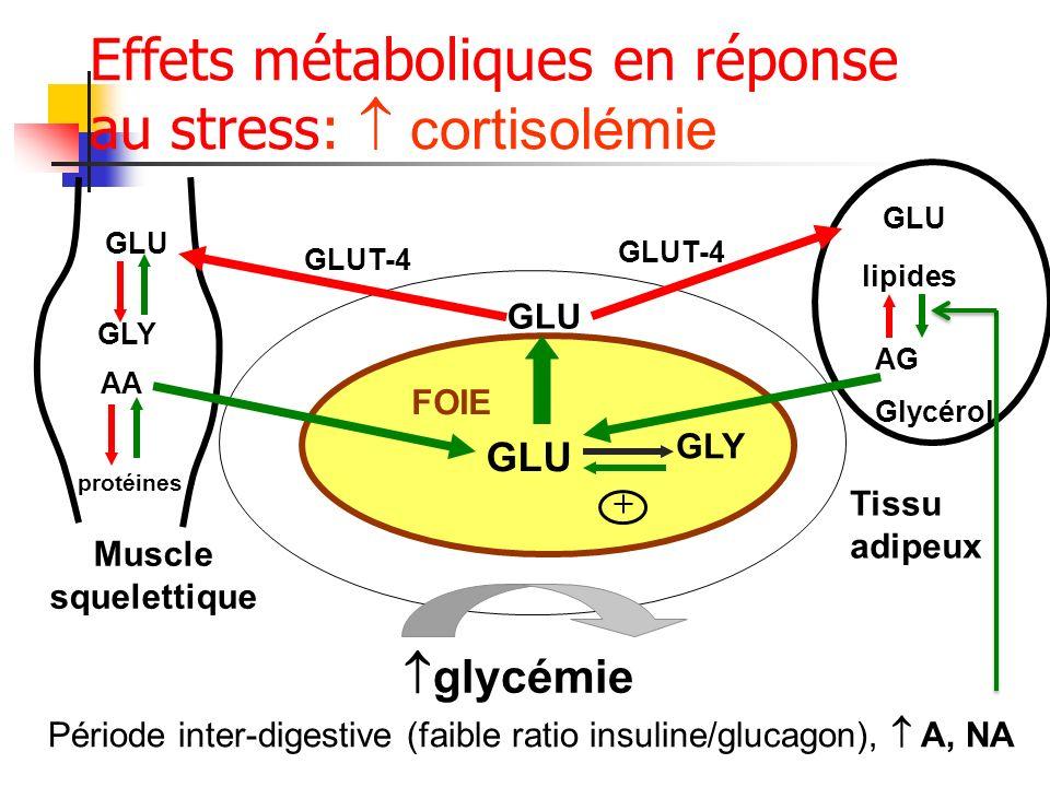 Effets métaboliques en réponse au stress: cortisolémie FOIE GLU Tissu adipeux GLU Muscle squelettique lipides AG Glycérol glycémie GLY + GLU AA protéi