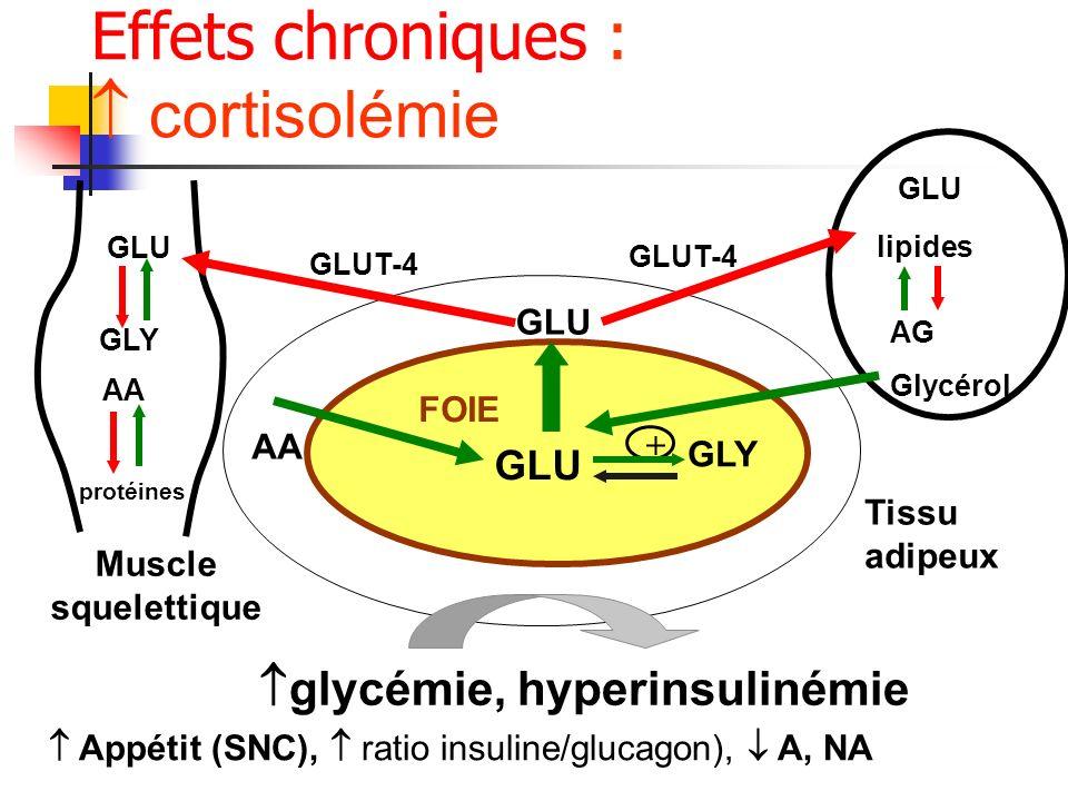 Effets chroniques : cortisolémie FOIE GLU Tissu adipeux AA GLU Muscle squelettique lipides AG Glycérol glycémie, hyperinsulinémie GLY + GLU AA protéin