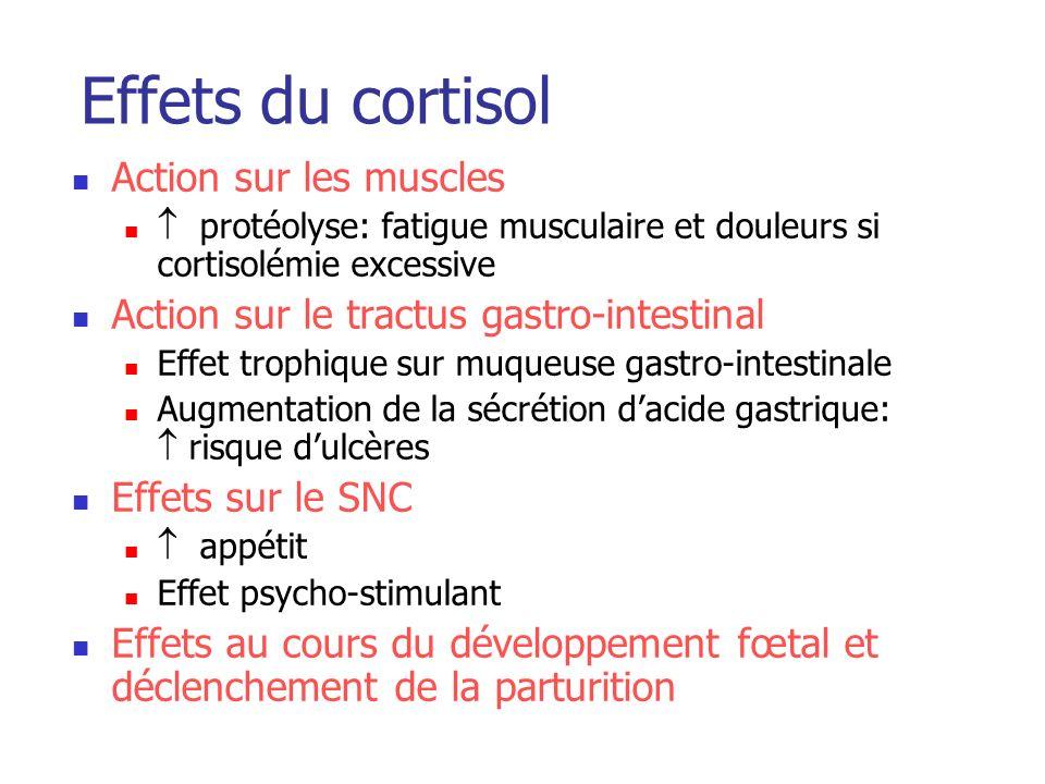 Effets du cortisol Action sur les muscles protéolyse: fatigue musculaire et douleurs si cortisolémie excessive Action sur le tractus gastro-intestinal