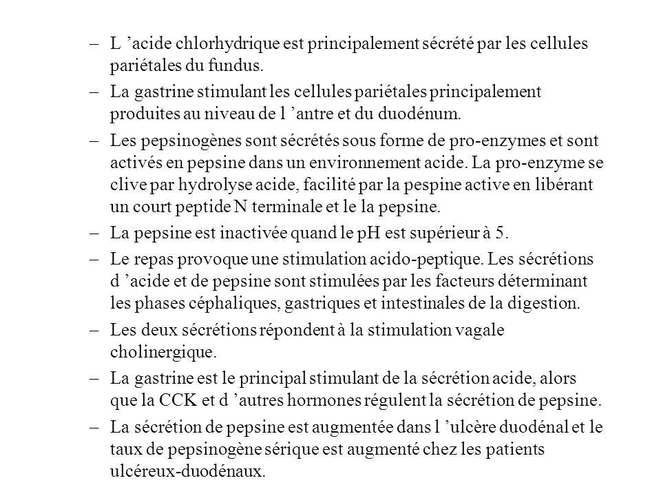 –L acide chlorhydrique est principalement sécrété par les cellules pariétales du fundus. –La gastrine stimulant les cellules pariétales principalement
