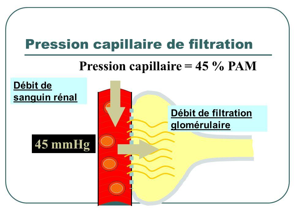 Système glomérulaire Glomérule Membrane glomérulaire Capillaire glomérulaire