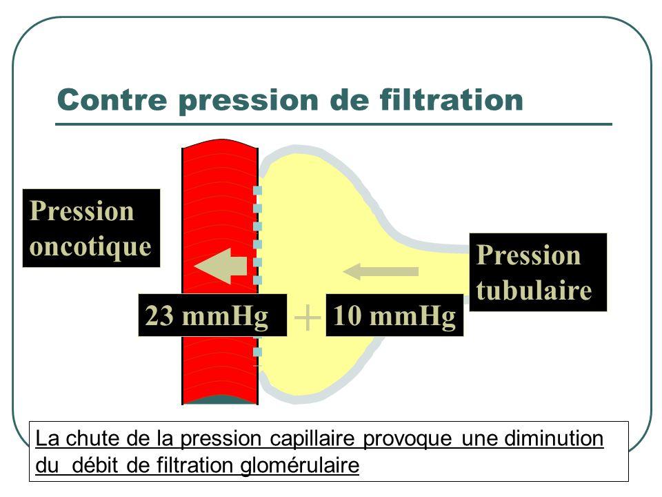 Pression capillaire de filtration 45 mmHg Pression capillaire = 45 % PAM Débit de filtration glomérulaire Débit de sanguin rénal