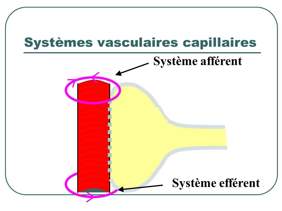 Contre pression de filtration Pression tubulaire Pression oncotique 23 mmHg10 mmHg + La chute de la pression capillaire provoque une diminution du déb