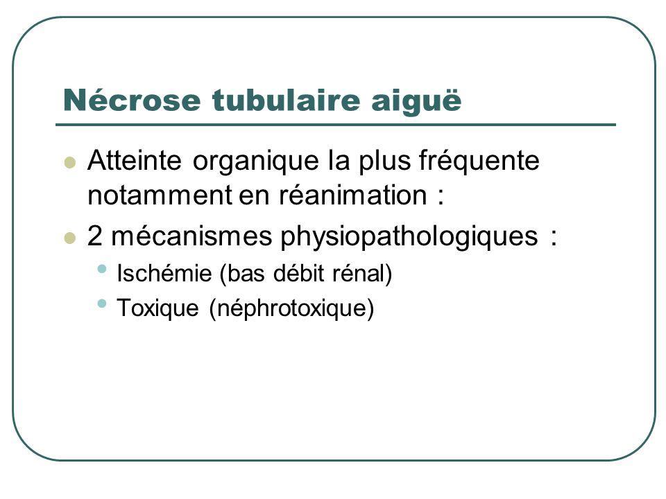 IRA organique Substratum anatomique Atteinte tubulo-interstitielle : Nécrose tubulaire aiguë Plus fréquente en réanimation 80 % Atteinte vasculaire At