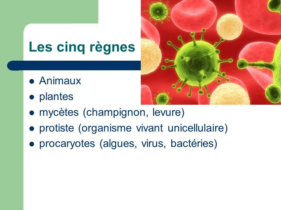 Les cinq règnes Animaux plantes mycètes (champignon, levure) protiste (organisme vivant unicellulaire) procaryotes (algues, virus, bactéries)
