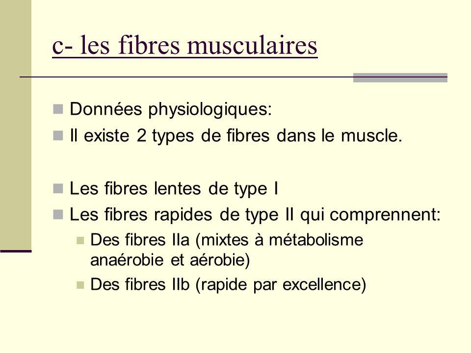 c- les fibres musculaires Données physiologiques: Il existe 2 types de fibres dans le muscle. Les fibres lentes de type I Les fibres rapides de type I