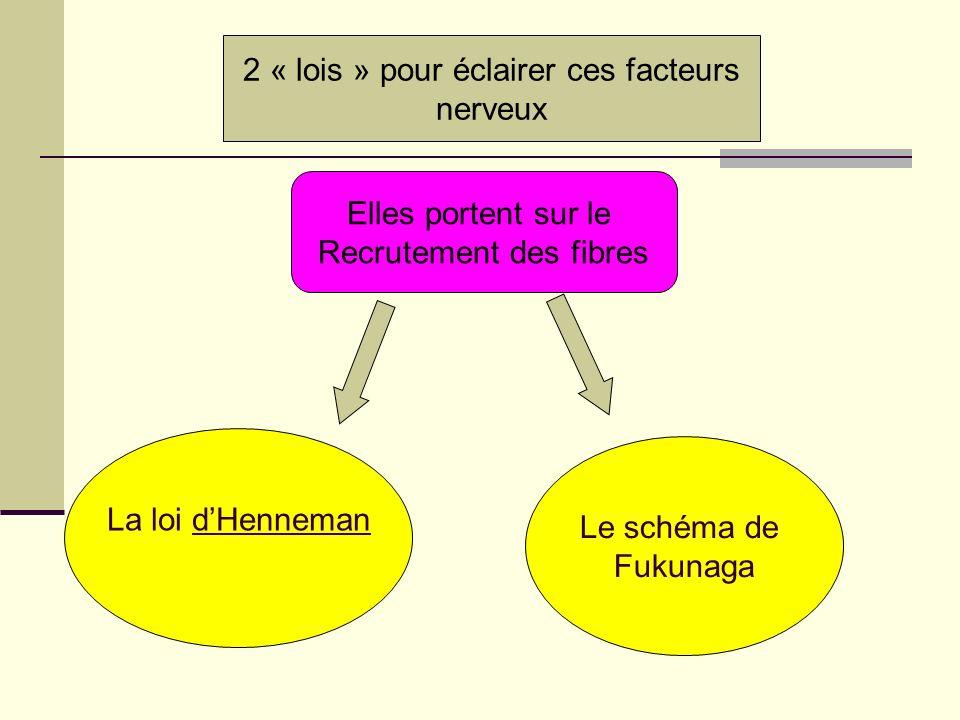 2 « lois » pour éclairer ces facteurs nerveux La loi dHenneman Le schéma de Fukunaga Elles portent sur le Recrutement des fibres