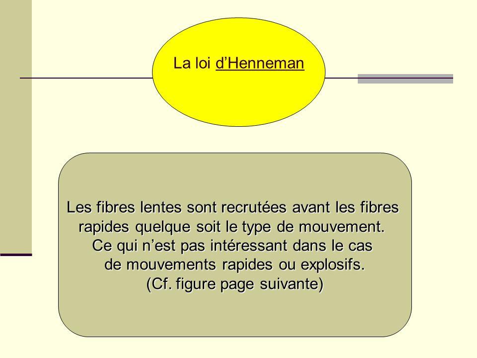 La loi dHenneman Les fibres lentes sont recrutées avant les fibres rapides quelque soit le type de mouvement. Ce qui nest pas intéressant dans le cas