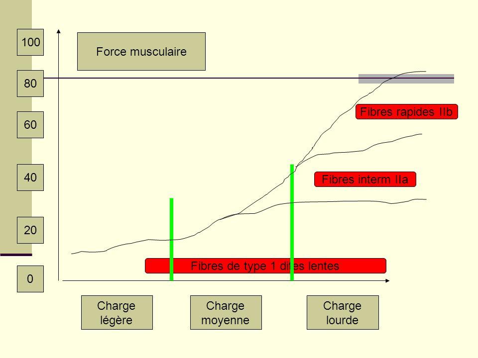 Fibres de type 1 dites lentes Charge légère Charge moyenne Charge lourde Fibres interm IIa Fibres rapides IIb Force musculaire 100 80 60 40 20 0