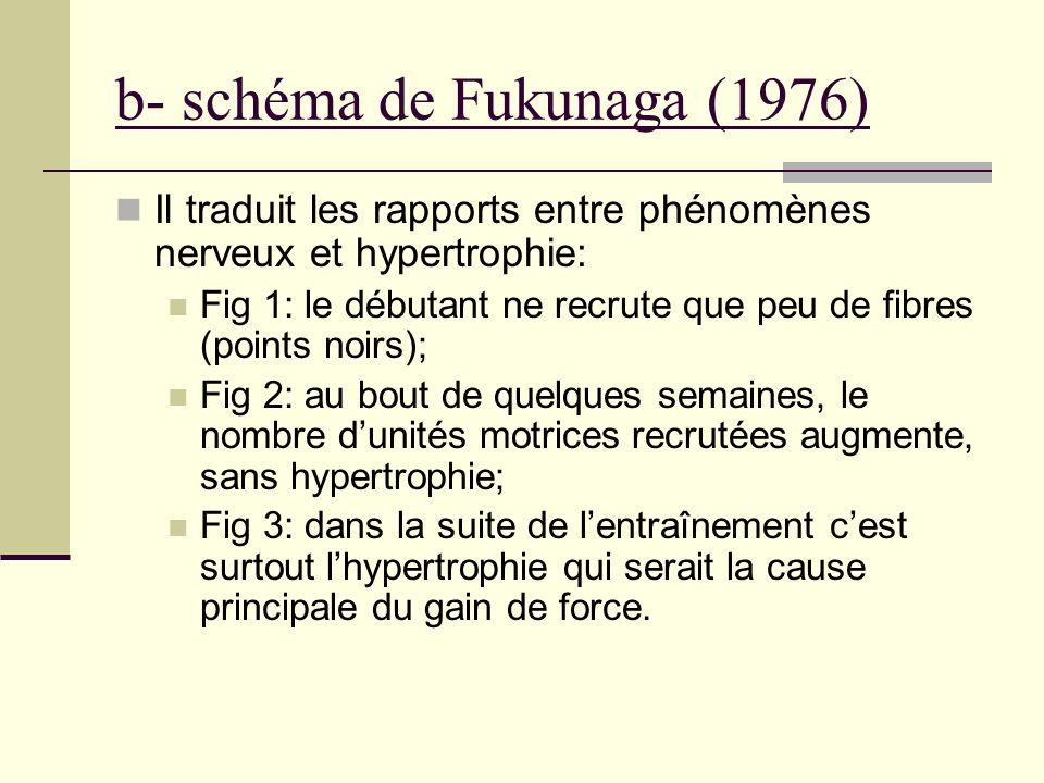 b- schéma de Fukunaga (1976) Il traduit les rapports entre phénomènes nerveux et hypertrophie: Fig 1: le débutant ne recrute que peu de fibres (points