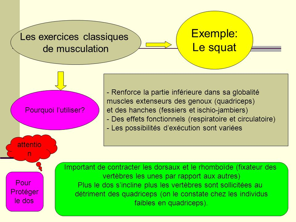 Les exercices classiques de musculation Exemple: Le squat Pourquoi lutiliser? - Renforce la partie inférieure dans sa globalité muscles extenseurs des