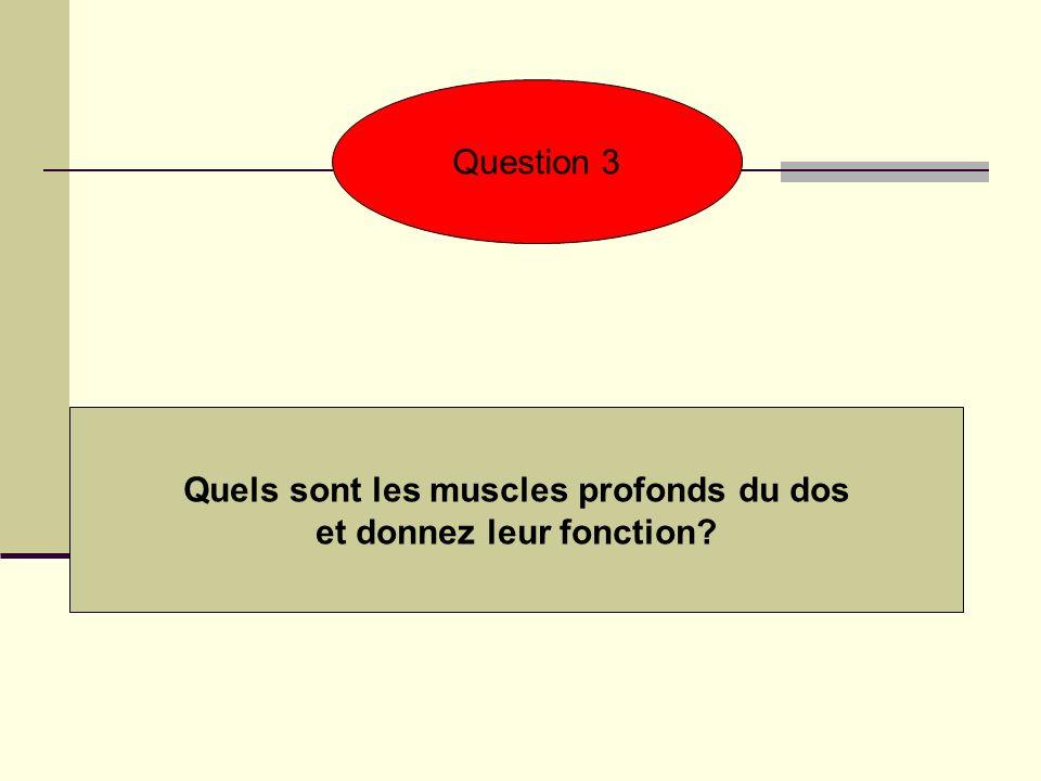 Question 3 Quels sont les muscles profonds du dos et donnez leur fonction?