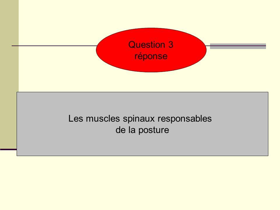 Question 3 réponse Les muscles spinaux responsables de la posture