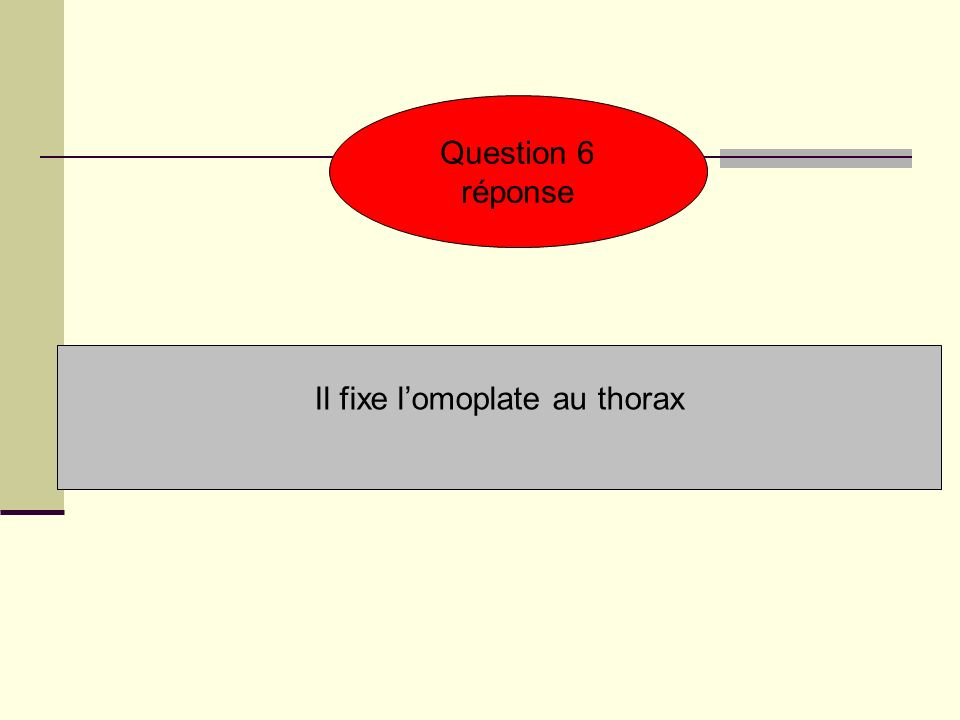 Question 6 réponse Il fixe lomoplate au thorax