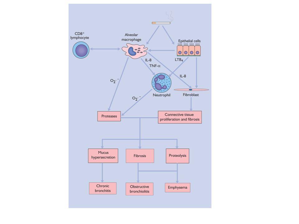 Physiopathologie de linsuffisance respiratoire et de la dyspnée chez patient BPCO emphysémateux : I.limitation du flux aérien des voies respiratoires périphériques (<3mm) en saison de : Inflammation Surproduction de mucus Ecrasement et déformation des bronchioles par destruction de leur paroi et la perte de soutien des alvéoles adjacents Augmentation du volume des poumons étirant les muscles respiratoires et diminuant leur efficacité.