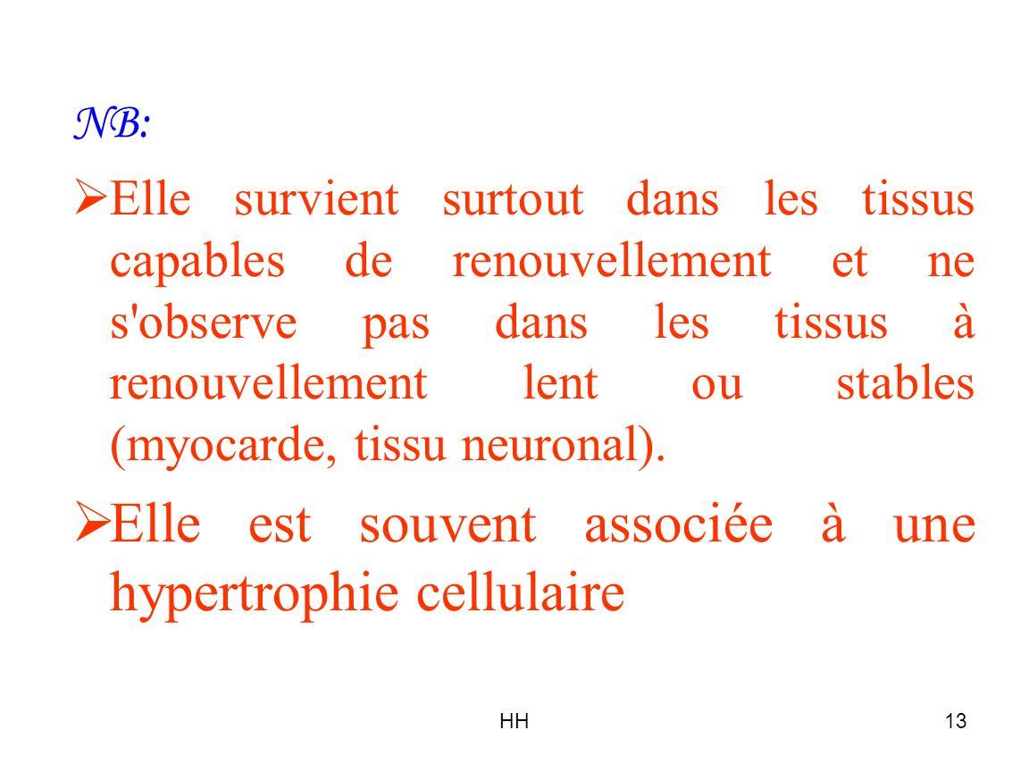 HH13 NB: Elle survient surtout dans les tissus capables de renouvellement et ne s'observe pas dans les tissus à renouvellement lent ou stables (myocar