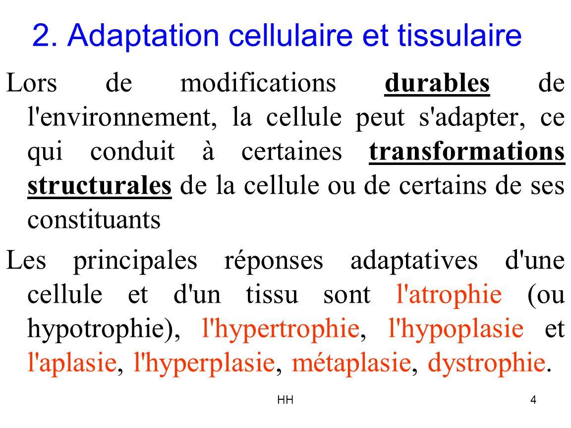 HH4 2. Adaptation cellulaire et tissulaire Lors de modifications durables de l'environnement, la cellule peut s'adapter, ce qui conduit à certaines tr