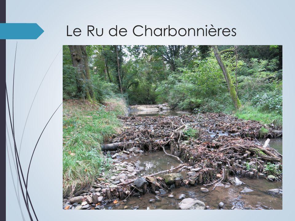 Le nombre dadultes dépend du potentiel daccueil de la rivière.