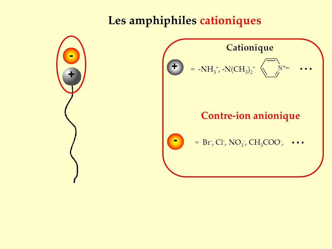 Contre-ion anionique Cationique = -NH 3 +, -N(CH 3 ) 2 +,... = Br -, Cl -, NO 3 -, CH 3 COO -,... + - + Les amphiphiles cationiques -